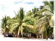 Puerto Vallarta - Strand mit Palmen