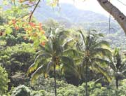Wälder nahe Puerto Vallarta